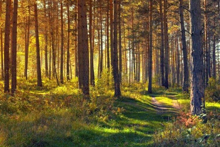 Бабиним літом потішимося: синоптики дали прогноз на середину вересня