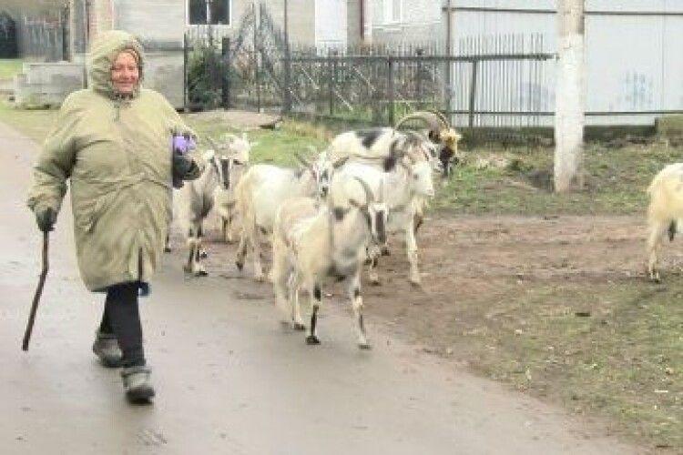 Волинянка пів життя розводить кіз, а для неї вони, як діти