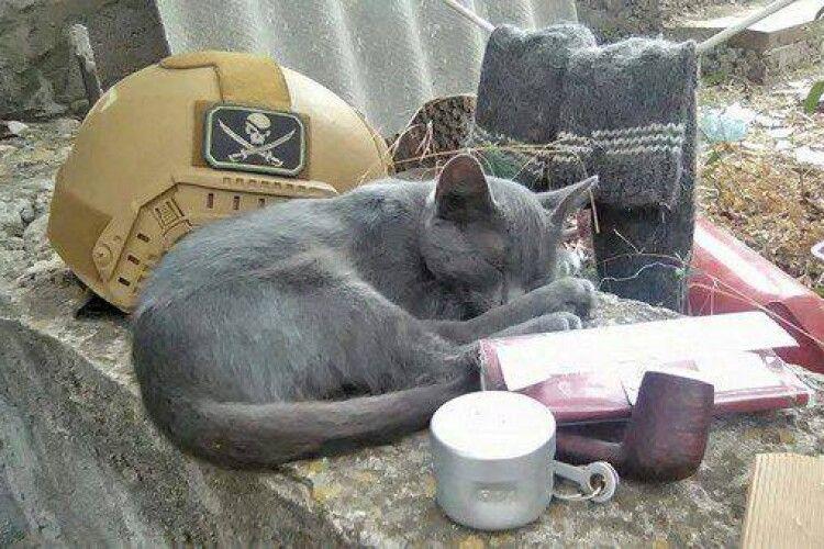 Кішка Машка несла службу разом із військовими на околицях Водяного