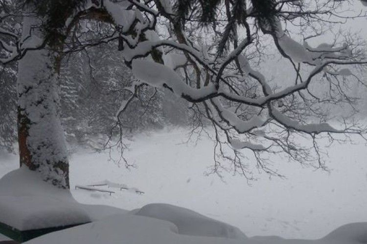 Озеро Синевир казково засніжило (Фото)
