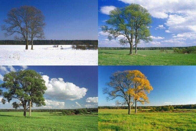 Зеленського просять видати указ, згідно з яким зима починатиметься із січня, весна – з квітня, літо –  з липня, а осінь – із жовтня