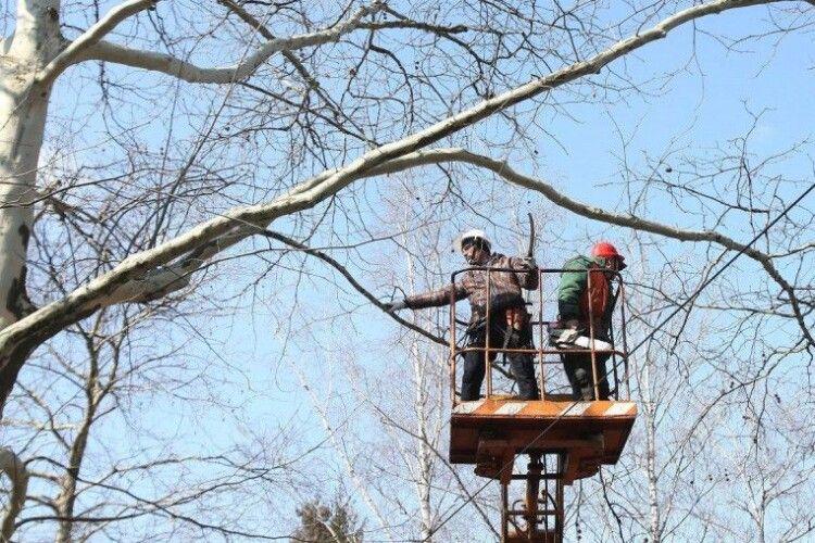 У місті на Волині через обрізку дерев вимикатимуть світло