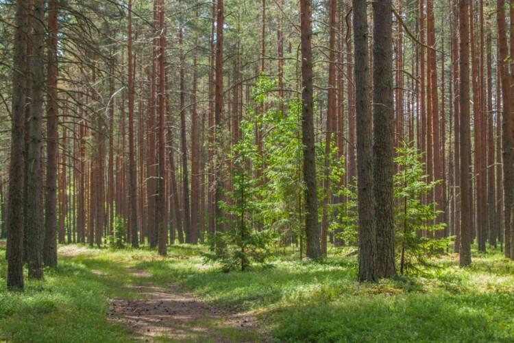 Літня волинянка блукала по лісу три доби