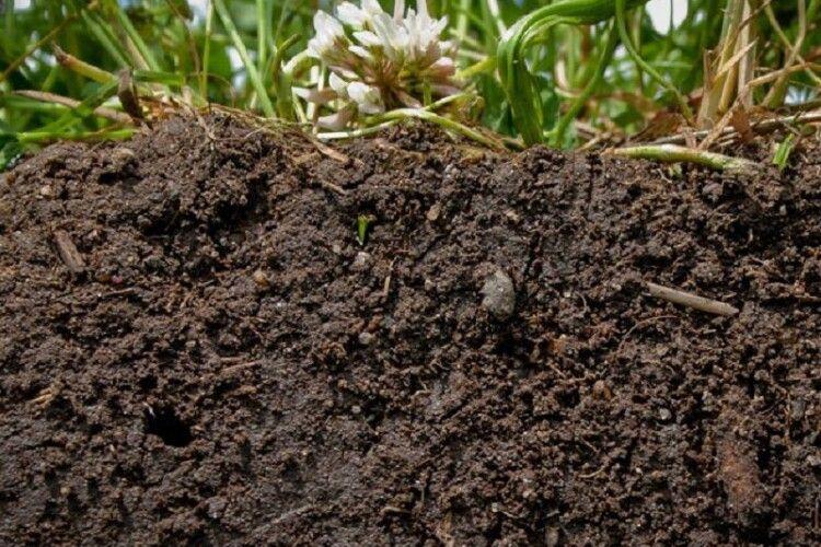 Жителі Горохівщини рили рів, а викопали... людські кістки