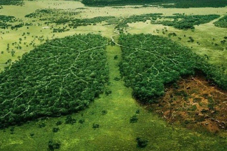 Волинське підприємство оштрафували за збитки екології
