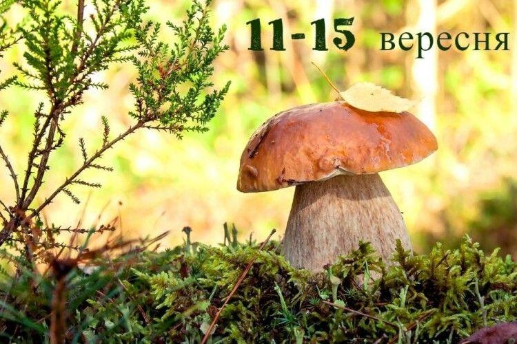 Волинські синоптики розповіли, якою буде погода у Луцьку на День міста