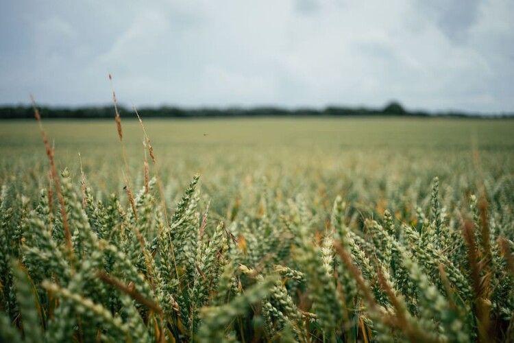 На Волині підприємство не платило за майже 200 га земель
