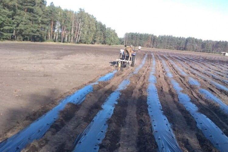 Заробітки будуть, як у Польщі: у громаді на Волині круглий рік збиратимуть ягоди