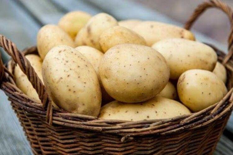 Українські картоплярі обурені, що нашу бульбу не пускають на ринок Молдови