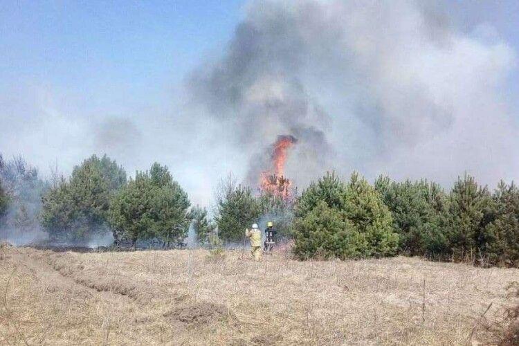 Волинь палає: протягом вихідних ліквідовано 3 пожежі в лісових масивах, 20 пожеж сухотрав'я (Фото)