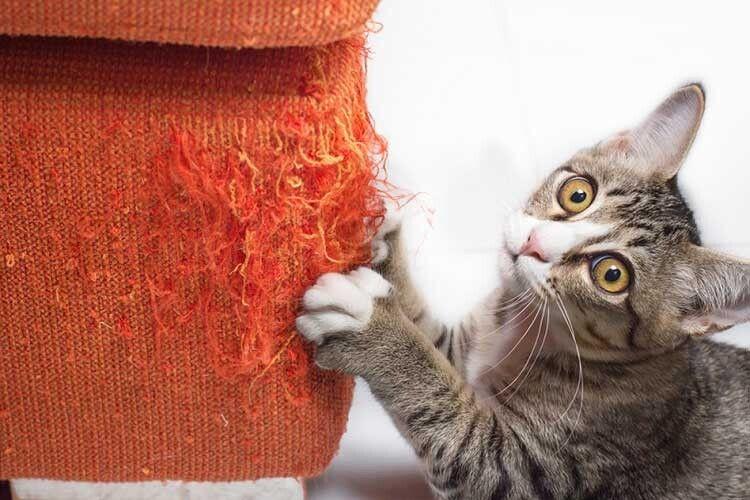 Якщо кіт подряпав меблі
