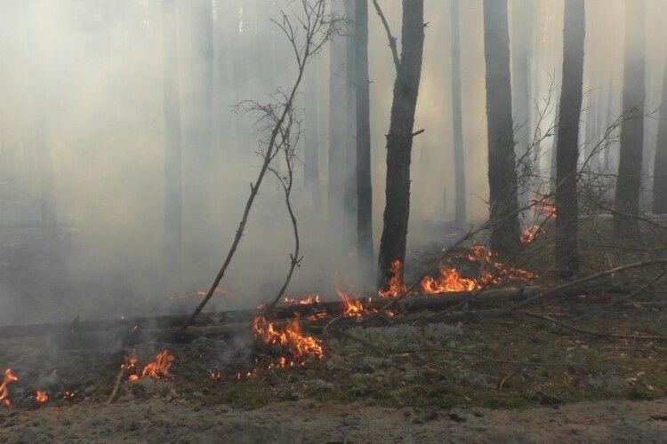 Кабмін виділив майже 45 мільйонів гривень на ліквідацію пожеж у Чорнобильській зоні