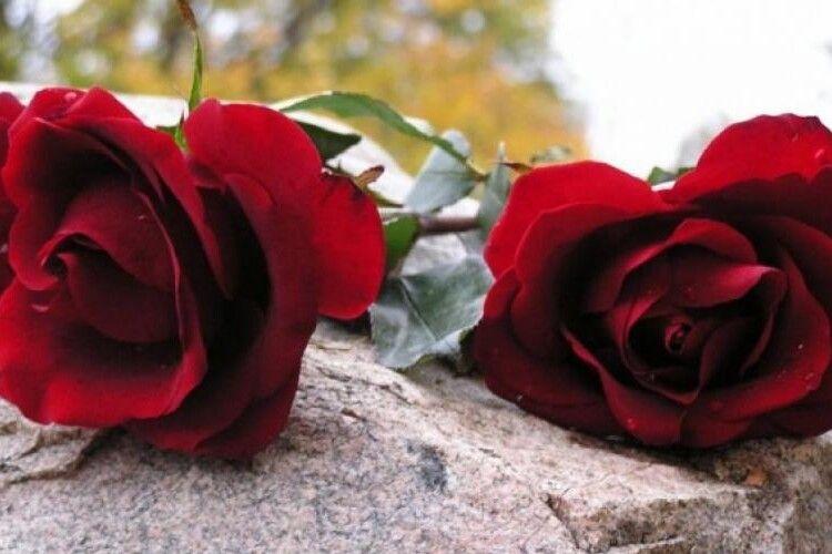 Чому на похорон несуть дві троянди: луцький священник розвінчав міф про парну кількість квітів