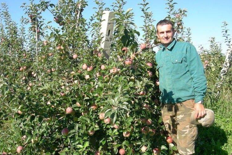 Волинський садівник Юрій Довгун з однієї яблуні збирає 20 кілограмів яблук (Відео)