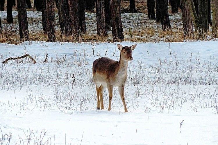 Чотирьом браконьєрам вбита козуля «обійдеться» у 40 тисяч гривень