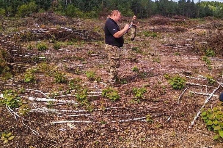 На Волині незаконно зрізали дерев на понад шість мільйонів