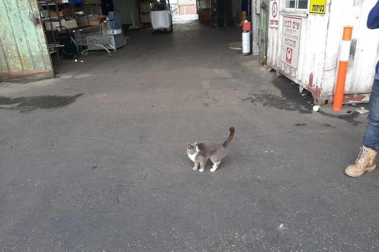 Кішка три тижні добиралася з України до Ізраїлю, харчуючись цукерками (Фото)