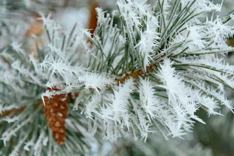Погода на четвер, 23 січня: іній цього дня – до мокрого і холодного літа