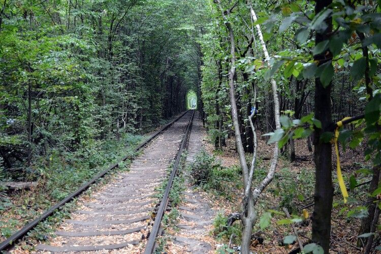 Показали, як виглядає засніжений тунель кохання у Клевані (Фото)