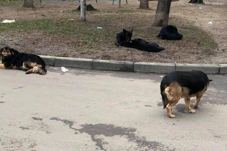 Лучанин поскаржився на собачі екскременти в дворі (Фото)