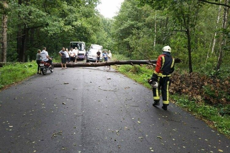На Рівненщині буревій звалив на дорогу чотири дерева (Фото)