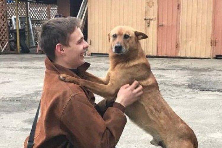 Злякався салютів і впав у яму: у Луцьку врятували чотирилапого охоронця філармонії