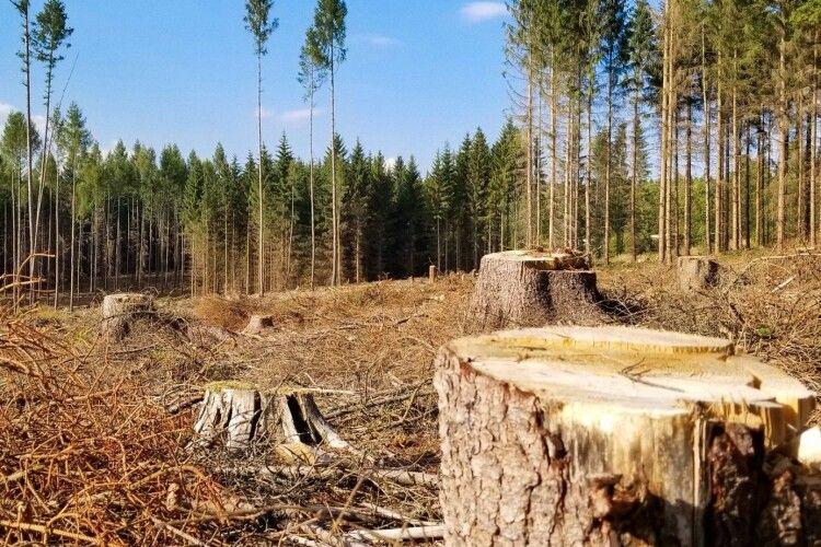Зеленського просять на 25 років заборонити вирубку лісів на Волині