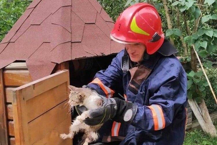 Бійці ДСНС рятували кота, який шубовснув у криницю (Фото)