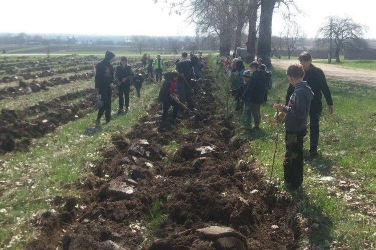 На Горохівщині селяни висадили на пустирі 2000 сосен (Фото)