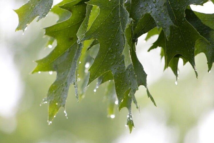 Погода на четвер, 25 червня: початок гарячого літа відкладається