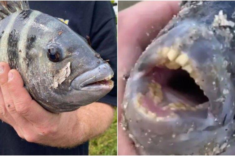 «Ніколи такого не бачив»: чоловік зловив рибу з людськими зубами (Фото)