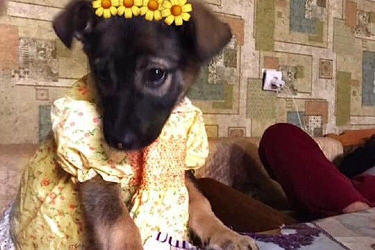 У Луцьку шукають вірного друга для цуценятка-модненятка (Фото)