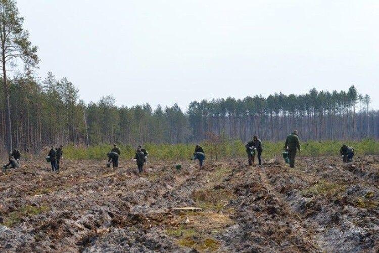 На Волині хочуть створити нові ліси