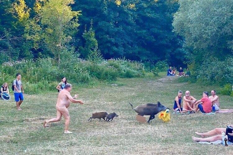 У Берліні сім'я диких кабанів посеред білого дня поцупила в голодупого дядька сумку з ноутбуком (Фото 30+)