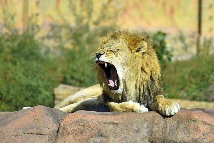 Звірі в Луцькому зоопарку лягатимуть спати на годину раніше
