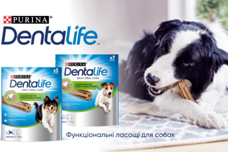 Спеціальний корм для чищення зубів собаці