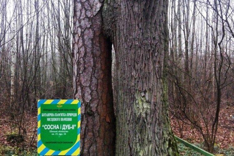 Дві неймовірні пам'ятки природи є в Шацькому лісництві