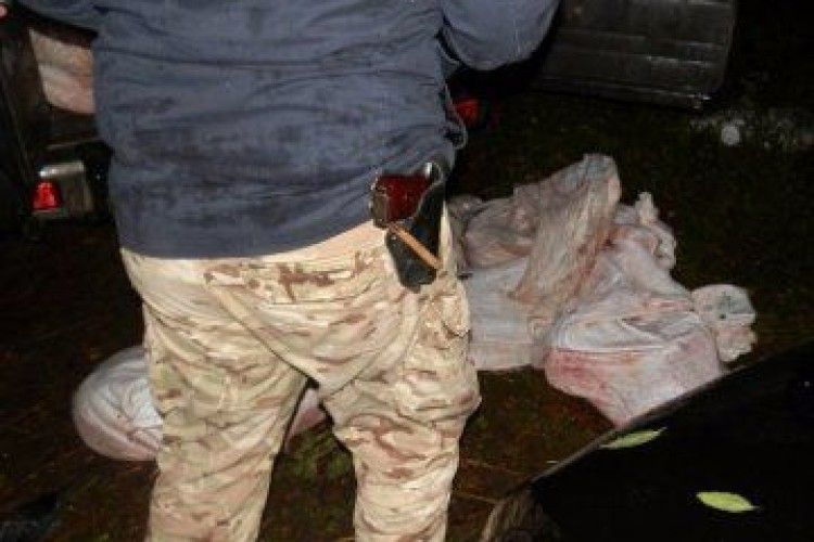 Судитимуть волинян, які вбили двох лосів на території Національного природного парку «Прип'ять-Стохід»