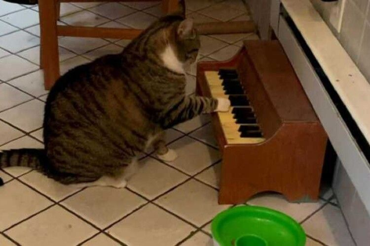 Грає на піаніно: котик незвичним способом просить їжу (Відео)
