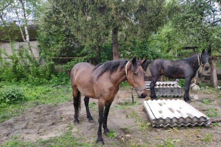 У місті на Рівненщині поліцейські шукають господаря двох коней (Фото)