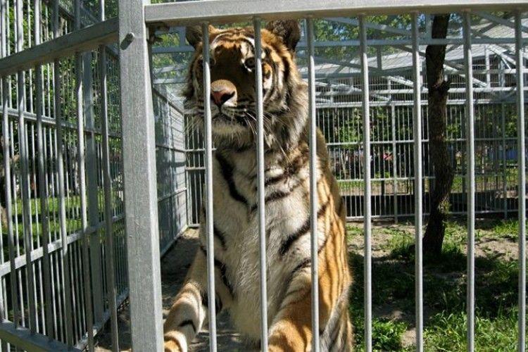 Працівники зоопарку просять приносити домашніх тварин на корм хижакам