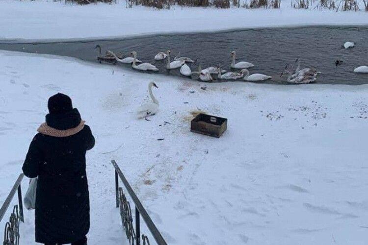 У Володимирі-Волинському рятували птахів