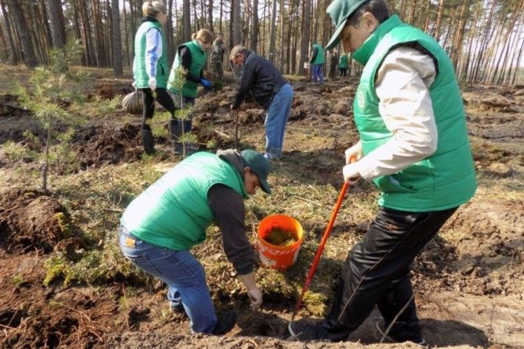 Працівники Любешівської райдержадміністрації допомагали лісівникам