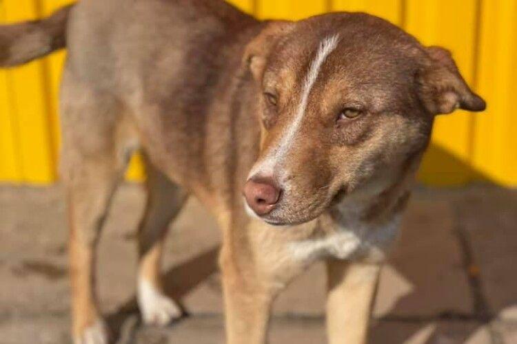 На Волині шукають вірного другана для пса Каштана (Фото)