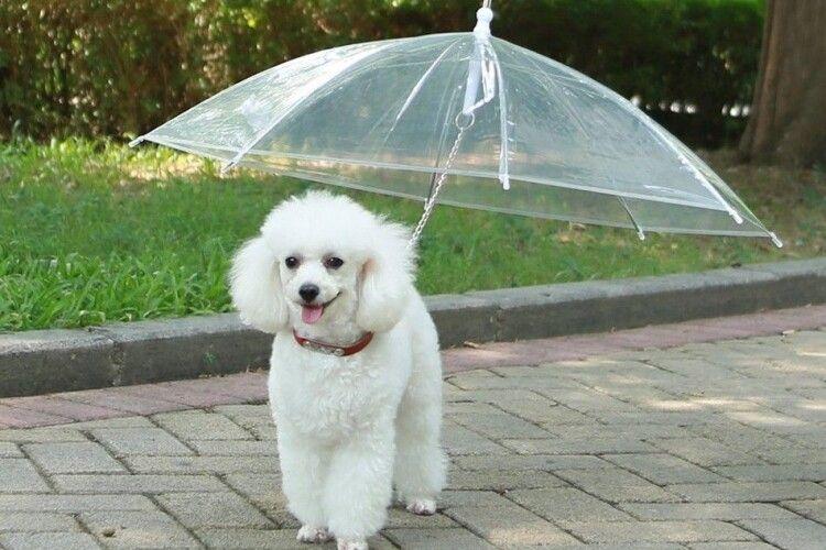 Погода на вівторок, 29 вересня: буде прохолодно, та ще й дощитиме
