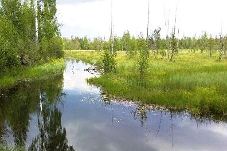 Кабмін постановив створити на Рівненщині Національний природний парк «Пуща Радзивіла»