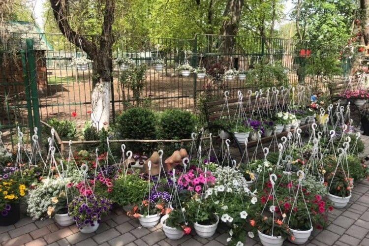 Ще й карантин не закінчився, а Луцький зоопарк вже цвіте і пахне (Фото)