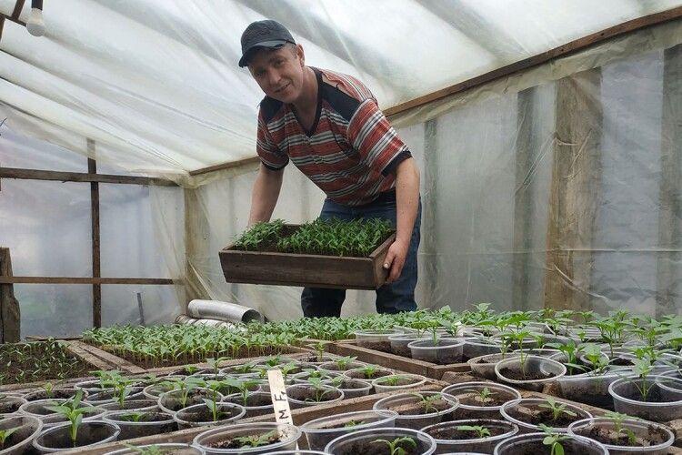 Батько ізсином плекають 30тисяч томатів та15тисяч перців (Фото)