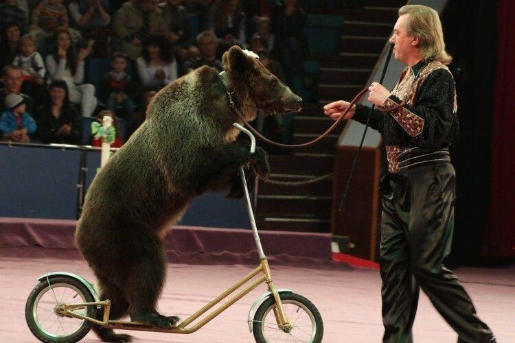 У цирках Словаччини більше не виступатимуть слони, ведмеді та мавпи