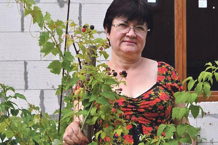 У саду волинянки абрикоси достигають на початку червня, а черешні – аж у серпні